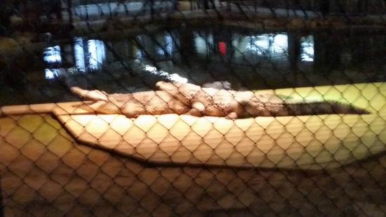 South of the Border, Carolina del Sur: gators keeping warm