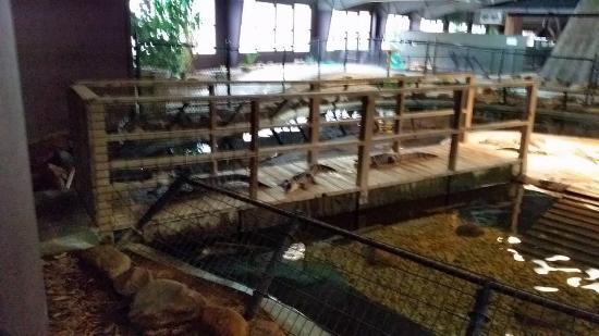 South of the Border, เซาท์แคโรไลนา: gators on the bridge wait to be fed at Reptile lagoon