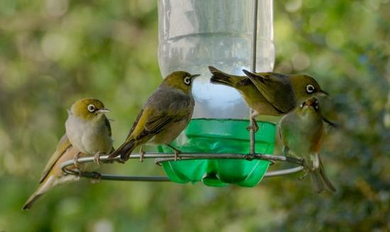 Avalanche Bed and Breakfast : Birds are frequent visitors to our garden