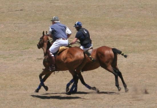 Franshoek Farm and Polo School: Spirited competitors