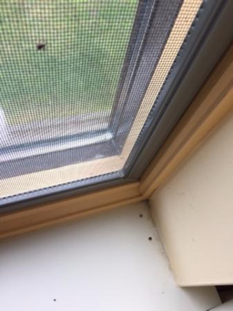 แกลลิคูน, นิวยอร์ก: Bugs and dirt on windows etc.