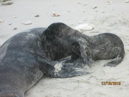 Genovesa, Ecuador: Sea lions