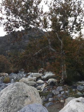 Buckeye Tree Lodge 사진