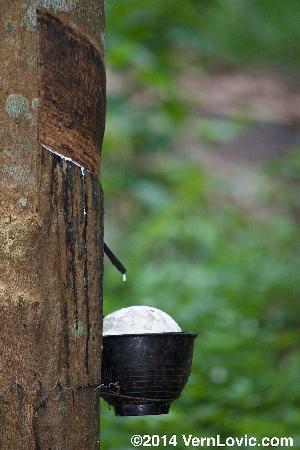 Phanom Bencha Mountain Resort 이미지
