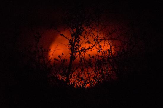 Sausage Tree Safari Camp: Blood moon in Balule