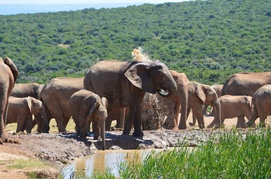 Addo Reach and Hein's Cottage: Elephants at Harpoor dam