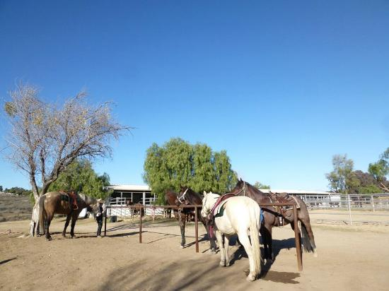 Temecula Wine Country Horseback Riding