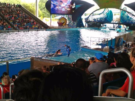Shamu Theater Picture of SeaWorld San Antonio San Antonio