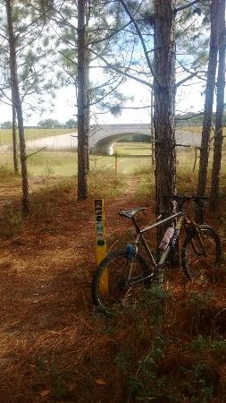Santos - Belleview Trail: IMG_20151209_104601249_large.jpg