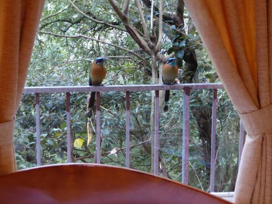 Cabinas Eddy B&B: View from bed