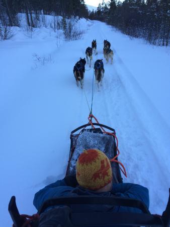 Fagerlund Husky - Dog sledding Geilo