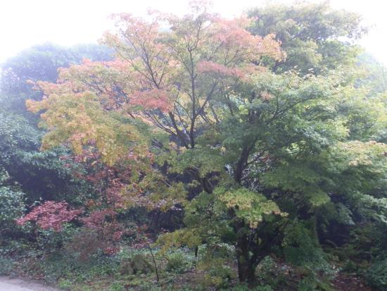 St Austell, UK: Autumn colours at Heligan