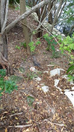 The Grand Mayan at Vidanta Riviera Maya: Animales