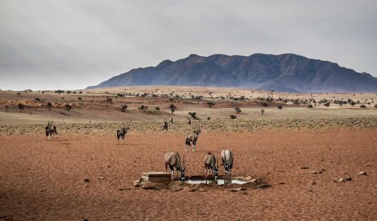 NamibRand Nature Reserve : Oryx at a waterhole, Day 3 hike