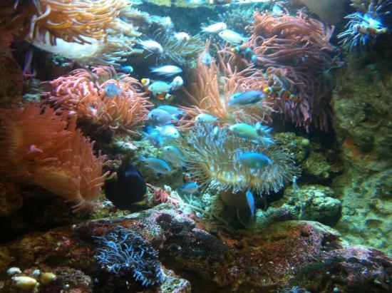 Imag0600 picture of georgia aquarium atlanta for Go fish georgia