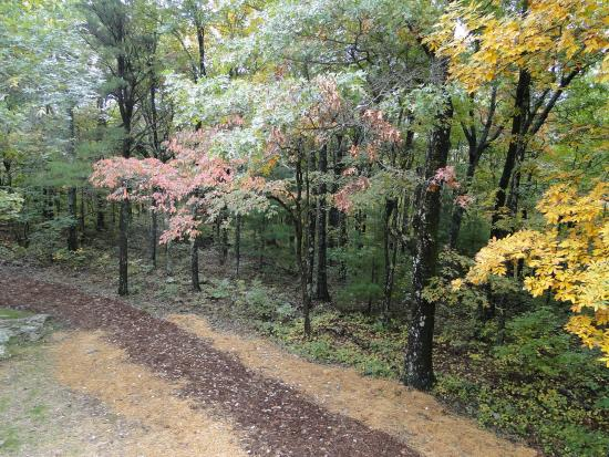 Chatsworth, Georgien: fall colors on trail