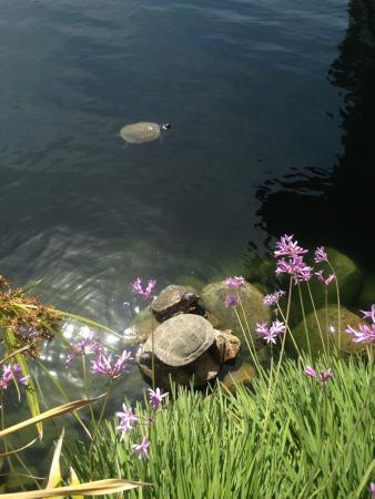 Self Realization Fellowship Lake Shrine Temple: Turtle & Flower