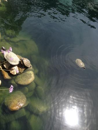 Self Realization Fellowship Lake Shrine Temple: Turtles at Lake 1