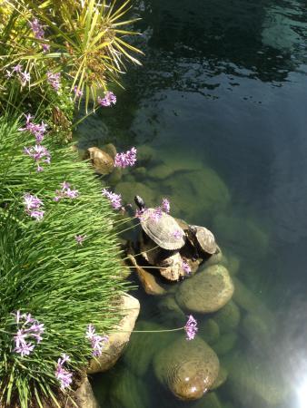 Self Realization Fellowship Lake Shrine Temple: Turtles at Lake 2