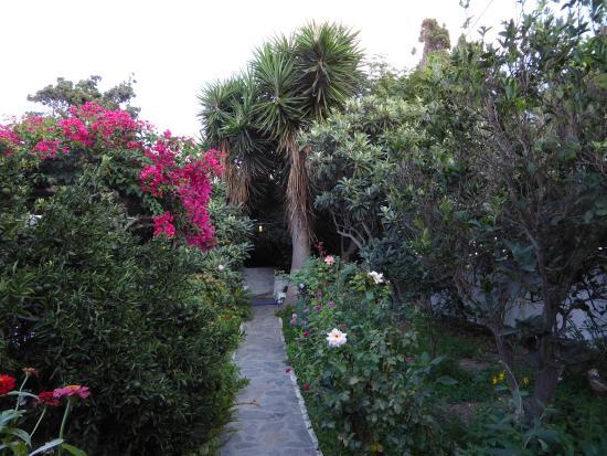 Anna Studios Amorgos: the garden