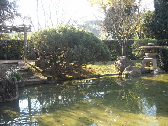 Laghetto foto di giardino giapponese roma tripadvisor