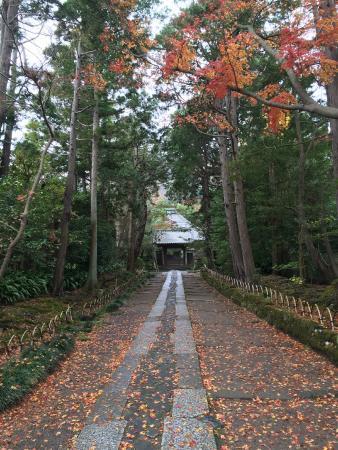 Jufukuji Temple: 落ち葉の道