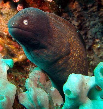 Blue Ribbon Dive Resort: Eels don't mind getting their pic taken.