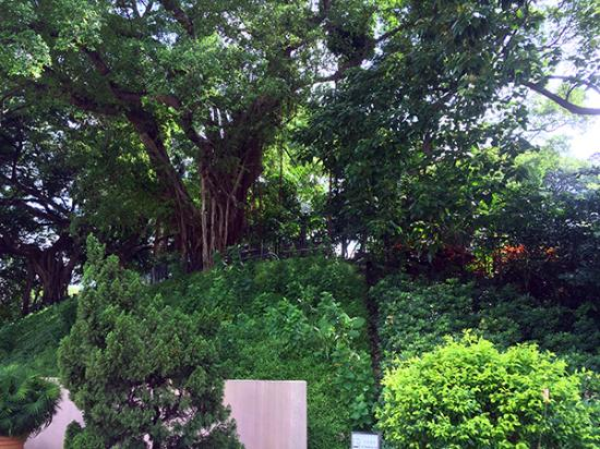 Photo1 Jpg Picture Of Kowloon Park Hong Kong Tripadvisor
