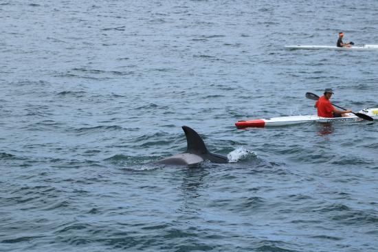 Ocean Safaris: Our boat patiently waits for the orca whale to come up to water