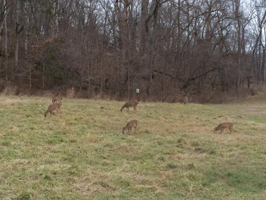 Sullivan (MO) United States  city photos : Deer Picture of Meramec State Park, Sullivan TripAdvisor