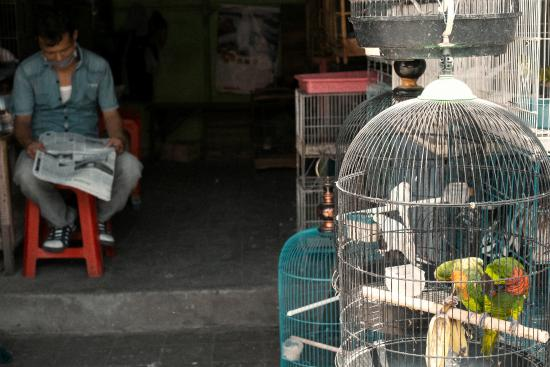 Denpasar Bird Market: EXOTIC PET MARKET IN DENPASAR