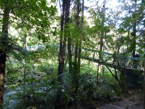 Whangarei, New Zealand: Bridge on walk through woods