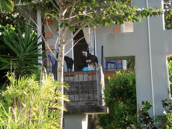 Almond Tree Hotel Resort: Puppies on the balcony
