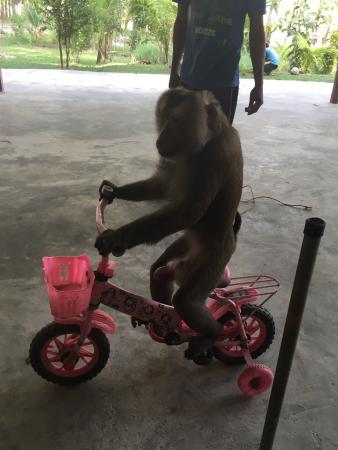 Lanta Monkey School: photo1.jpg