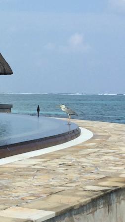 Four Seasons Resort Maldives at Kuda Huraa: photo2.jpg