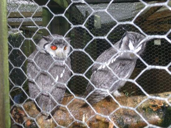 Kington, UK: Owls