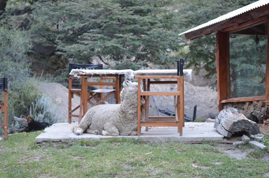 Bonanza Eco Aventura Camping: Una de las mascotas del camping