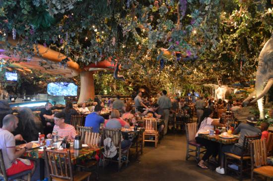 Disney Animal Kingdom Rainforest Cafe Hours