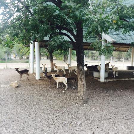 photo6.jpg - Picture of Safari Park Open Zoo, Kanchanaburi - TripAdvisor