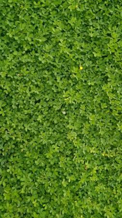 greeneries