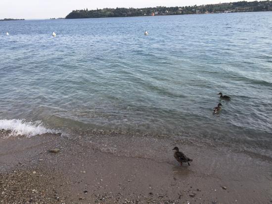 Barbarano di Salo, Italia: Выход к озеру