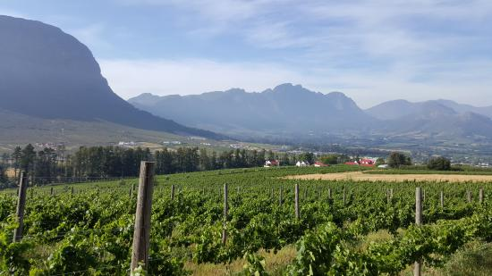 The vineyards below the cottages