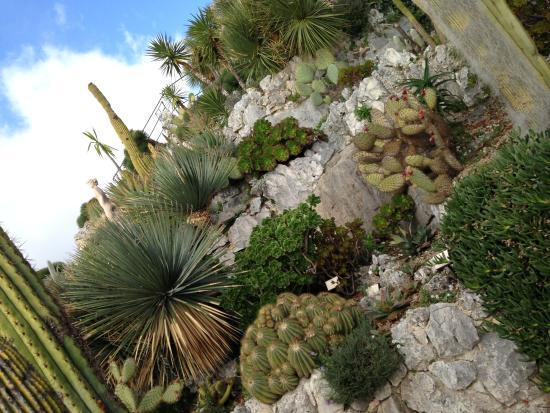 Le jardin exotique d 39 ze bild fr n le jardin exotique d - Jardin exotique d eze ...