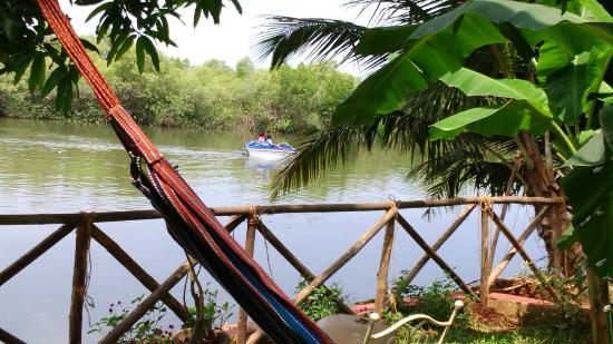 Serene Waters Guest House: backwaters view