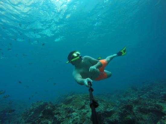 Plongée - Picture of Phi Phi Diving, Ko Phi Phi Don ...