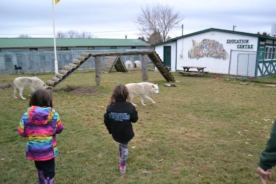Orono, Καναδάς: wolves