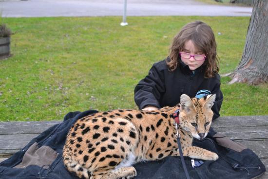 Orono, Καναδάς: serval cat