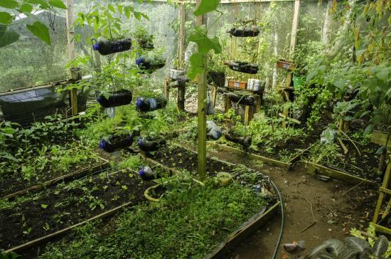 Ecological Sanctuary: Huertas Orgánica