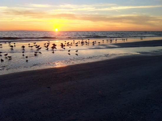 Casa del Mar Beach Resort: Sunset