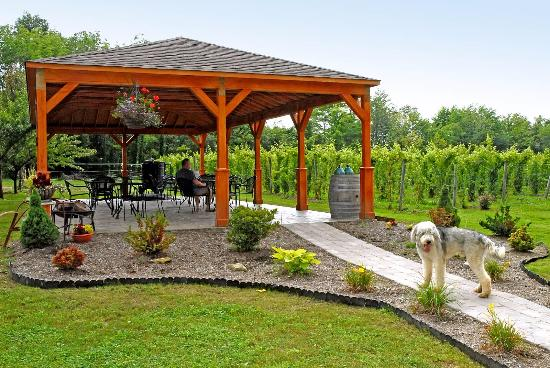 Maple Ridge Vineyard